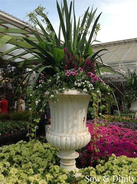 12 jumbo planter design ideas