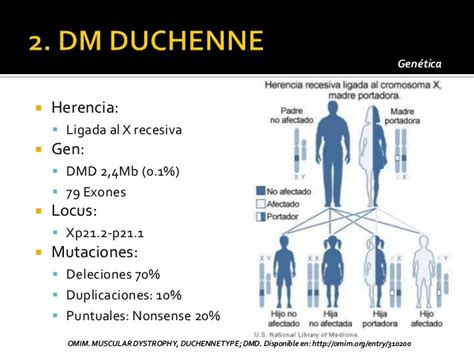 omim entry 310200 muscular dystrophy duchenne type dmd distrofias musculares