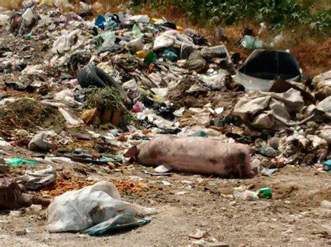 imagenes animales muertos llenan tiradero de animales muertos