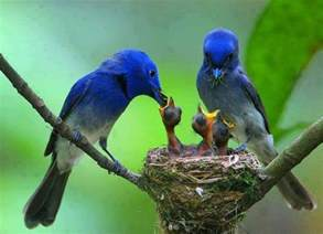 Image result for beautiful animal mothers day