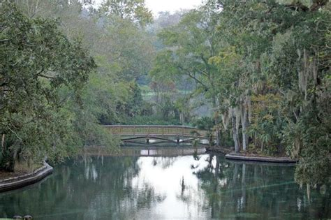 Wekiwa Springs Cabin Rentals by 17 Best Images About Florida S Wekiwa Springs On