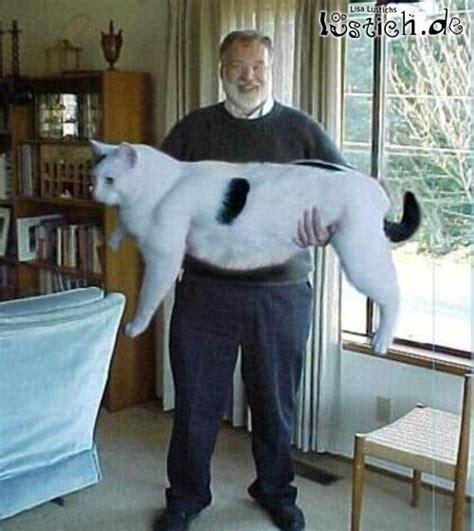 Decke Katze by 18344 Dicke Katze Jpg On Lol Ita Nymphet 4 No 9 Size All