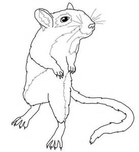 gerbil mouse coloring page free printable coloring pages