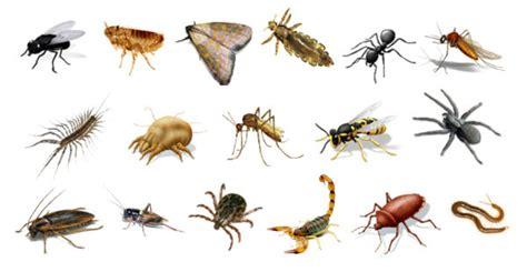 imagenes animales invertebrados animales invertebrados espaciociencia com