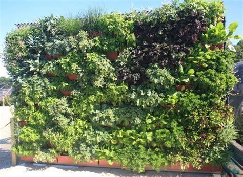 26 best growing herbs indoors images on