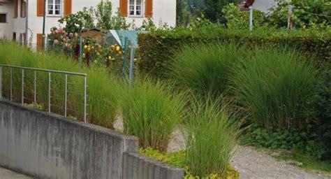 Pflanzen Als Sichtschutz Für Terrasse by Dekor Garten Gr 228 Ser