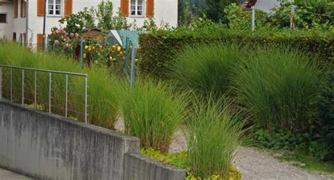 gräser für kübel winterhart dekor garten gr 228 ser