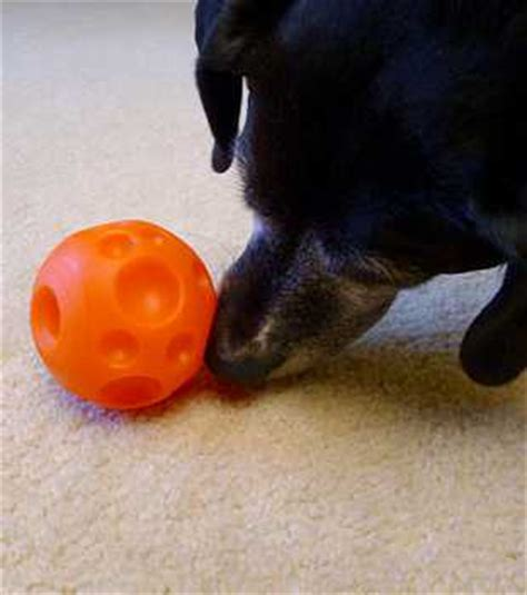 when do dogs balls drop s picks for the best treat dispensing toys chasing tales
