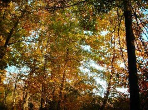 autumn leaves testo louis armstrong autumn leaves k pop lyrics song