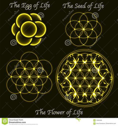 fiore d fiore d ottone di evoluzione di vita uovo simboli sacri