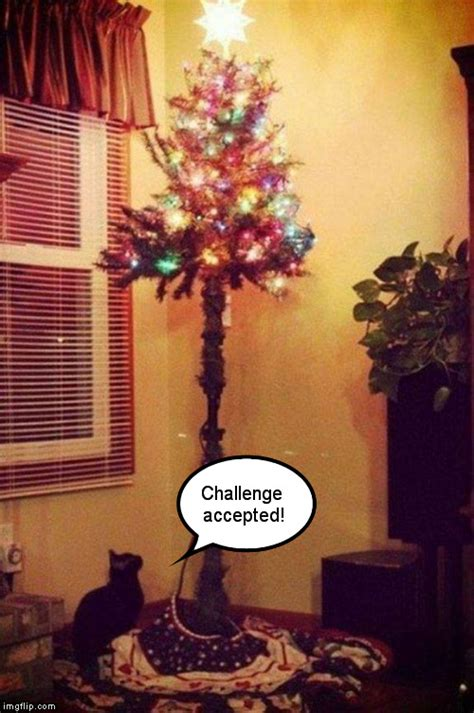Cat Christmas Tree Meme - cats and christmas trees imgflip