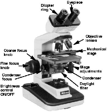 Parts Of A Light Microscope by Ibg102