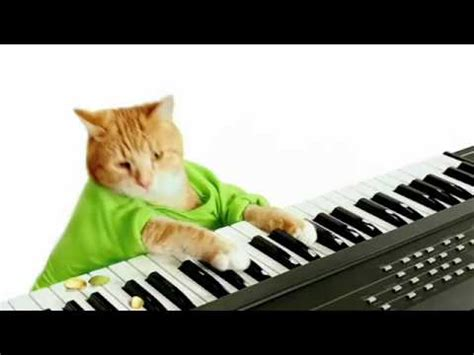 Cat Playing Piano Meme - keyboard cat video gallery sorted by views know your meme