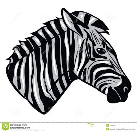 zebra head stock vector image 47881337