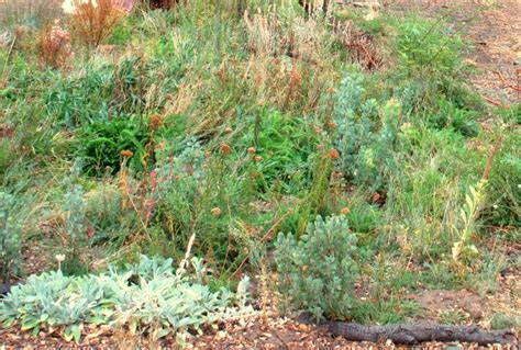 notes from the meadow user friendly deer resistant plant happy is the meadow planter sierra foothill garden