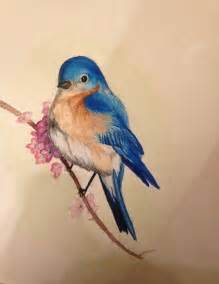 let s learn about unique birds letã s learn about animals books best 25 bluebird ideas on finch