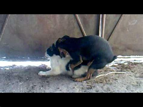 videos de chica asiend el amor un perro haciendo el amor con una gata youtube