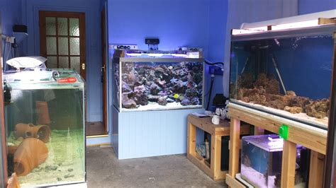 room fish designing a fish room reefs