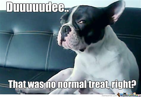 High Dog Meme - high dog is high by recyclebin meme center