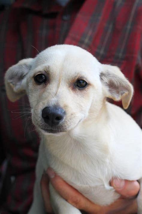 puppy palooza coastal humane society to host puppy palooza adoption event wiscasset newspaper