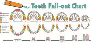 ages when baby teeth come in and fall out baby task 01b cathyoh91
