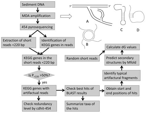 flowchart of protein synthesis flowchart of protein synthesis 28 images 1000 images