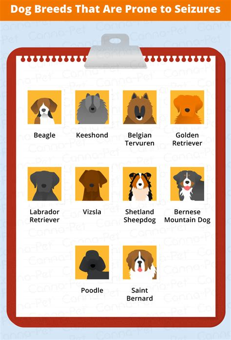types of seizures in dogs what breeds are prone to seizures canna pet