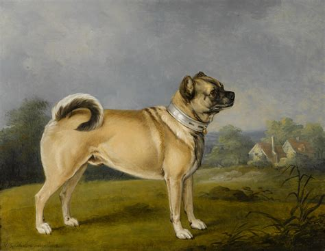 pug henry 1000 images about dogs in paintings on
