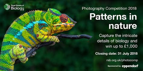 patterns in nature biology powerpoint royal society of biology photography competition 2018