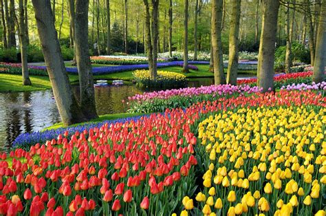 Botanical Garden Flowers Keukenhof Botanic Garden Netherlands