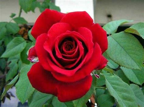 macam macam tanaman hias bunga yang paling indah jenis tanaman terbaru