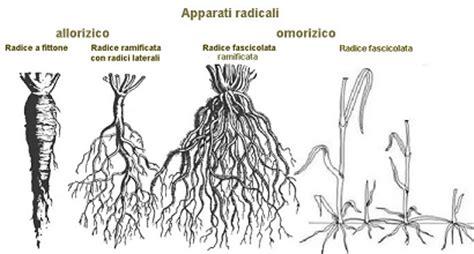 Piante Radici Profonde by Coltivazioni