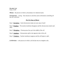 section 3 reinforcement dna cell division worksheet answer key