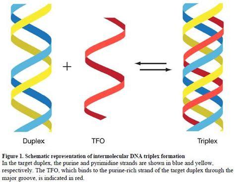 triple helix dna uber sayans the theory godlike abilities via an