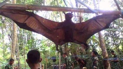 giant bat   peru youtube