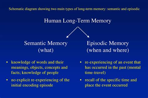 define memory organization in detail all in one tuts people