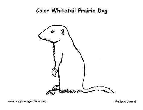 coloring pages of prairie dogs prairie whitetail coloring page