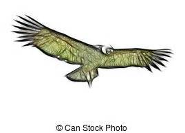 andean condor distribution royalty free condor stock illustration images 529 condor illustrations