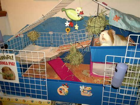 come costruire una gabbia per scoiattoli foto le nostre gabbie pagina 5 gabbie terrari