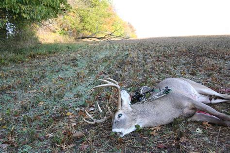 what colors can deer see whitetail vision shedding light on deer eyesight outdoorhub