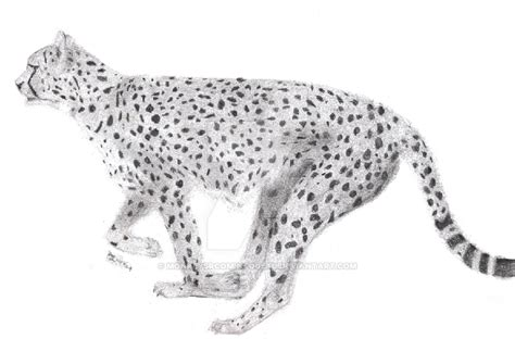 sketchbook cheetah running cheetah sketch by monkeysrcomintogetu on deviantart