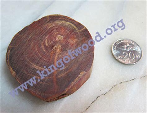 Dijamin Wooden Button Kancing Kayu raja kayu king of wood penunduk kayu raja magical wood raja kayu