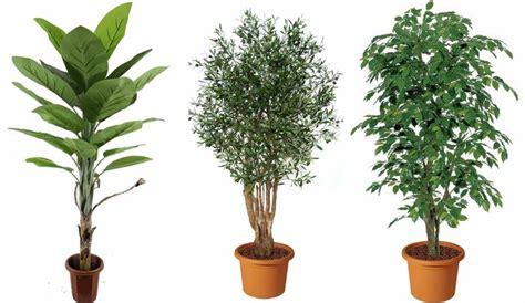 piante ornamentali da interno finte piante artificiali piante finte caratteristiche delle
