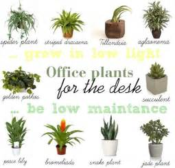 office desk plants 1000 ideas about office plants on pinterest interior