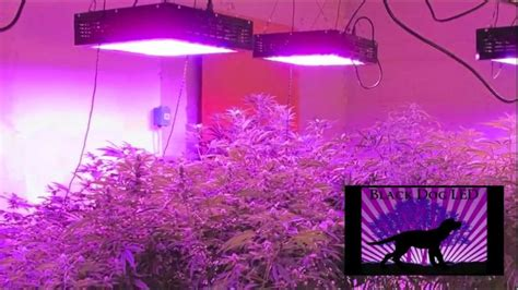 lade grow led light design amazing commercial led grow lights