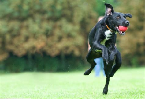 pictures  safe exercises     dog