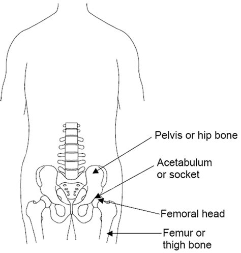 diagram of the hip diagram of hip