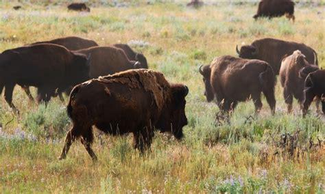 grand teton national park elk deer hunting trips outfitters alltrips