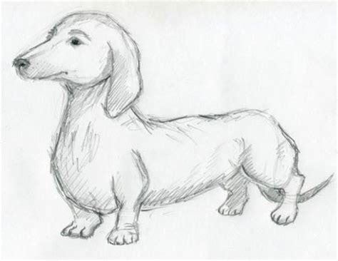 dog sketches  inspiration