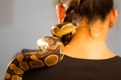 a pet how to get a pet snake with pictures wikihow